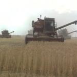 Марьяновский район вышел в лидеры по уборке урожая
