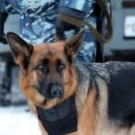 Стинг помог раскрыть кражу в п.Конезаводской
