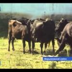 День фермера Марьяновский район