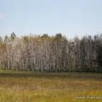 Марьяновские леса методично уничтожают гусеницы