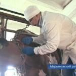 К Марьяновским животным приехали лучшие ветеринары области