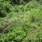 Продам земельный участок в г. Ялте пгт. Массандра