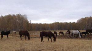 лошадь украли в марьяновке