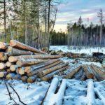 Жителя Марьяновского района осудили за незаконную рубку леса