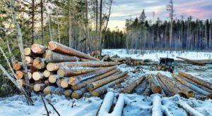 вырубка леса марьяновка