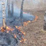 📛  Бесконтрольный пал сухой травы – причина пожаров