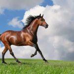 Похищенная лошадь возвращена владельцу 👮